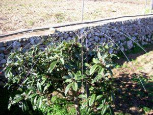 Vogelschutz für Garten und Balkon